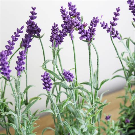 lavender plants artificial lavender plant in pot by marquis dawe notonthehighstreet com