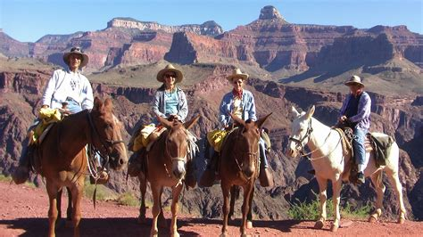 canyon grand wife down riding brother daughter ride mules into donkey