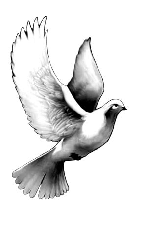 20 Dove Tattoo Designs And Ideas For Girls