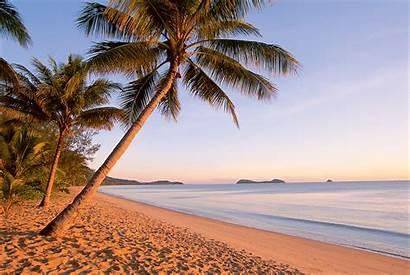 Beach Sand Palm Cairns Trees Beaches Kewarra