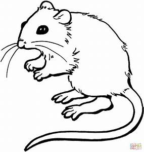 Mouse coloring page | Free Printable Coloring Pages