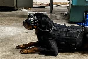 The Us Army Is Putting Ar Goggles On Military Dogs To