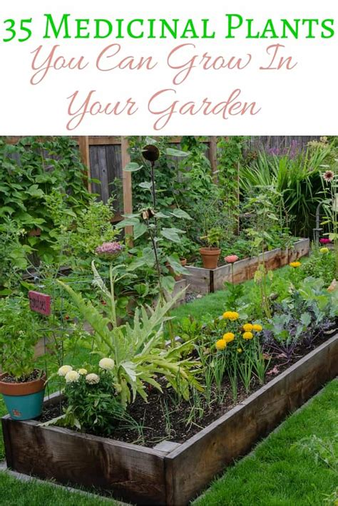 what to grow in a garden 35 medicinal plants you can grow in your garden