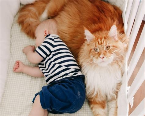 Keep Cats Out Of Crib by How To Keep Cat Out Of Crib Step By Step