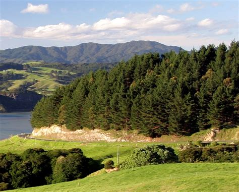 Physiological growth modelling of forests in New Zealand ...