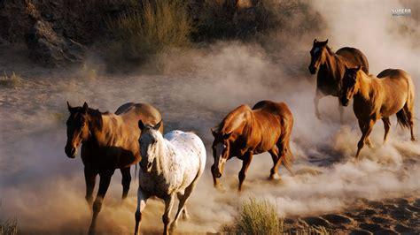 Wild Horse Wallpaper (59+ Images