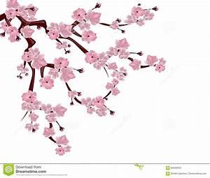 Dessin Fleur De Cerisier Japonais Noir Et Blanc : fleurs cerisier japonais dessin ~ Melissatoandfro.com Idées de Décoration