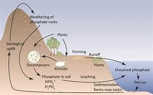 Schematic Figure Of The Phosphorus Cycle