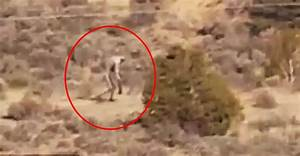 This Creature Was Just Caught On Film In The Desert And ...