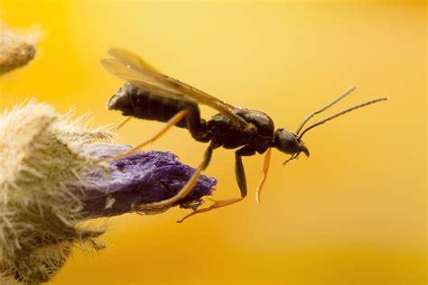 Fliegende Ameisen  Was Tun?  Kraut & Rüben
