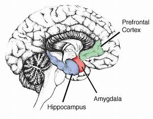 Blood Sugar Levels May Affect Hippocampus  Says Study