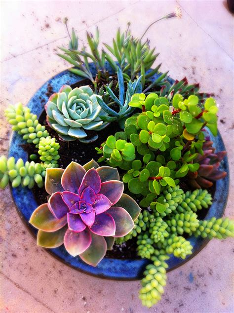succulents in a pot stunning succulent gardens the cottage market