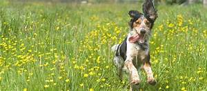 the dog house daycare in newmarket suffolk dog walkers With the dog house daycare
