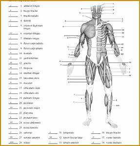 7 Muscle Contraction Worksheet