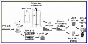 General Diagram For The Manufacturing Process Of Enzymes