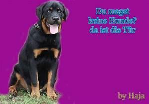 Da Ist Die Tür : du magst keine hunde da ist die t r whatsapp und facebook ~ A.2002-acura-tl-radio.info Haus und Dekorationen