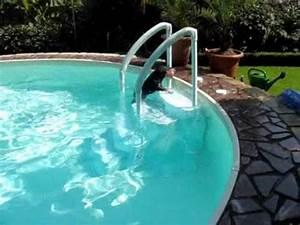 Hunde Pool Bauen : danny hat s youtube ~ Frokenaadalensverden.com Haus und Dekorationen
