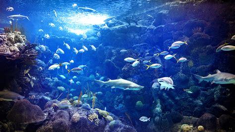 america aquarium diving madurodive