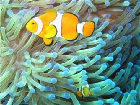 animals  kids clownfish