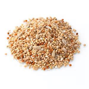 food for sparrows brinvale premium sparrow mix