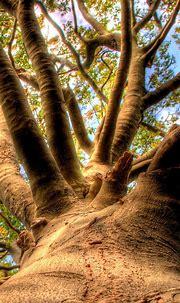 Tree Mistic Smartphone Wallpapers HD ⋆ GetPhotos