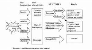 This Is A Flow Chart Of How Environmental Stresses Affect Plants  The Plants Responses Will