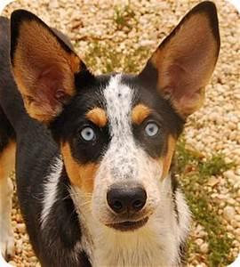 Bucky | Adopted Dog | A21244024 | Philadelphia, PA ...