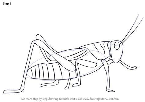 learn   draw  grasshopper insects step  step