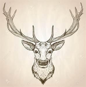 mannetjes hert tekening - Google zoeken | dieren ...