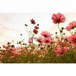 stickers autocollant ou affiche poster fleurs des champs With affiche chambre bébé avec champs fleur