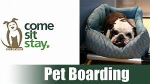 dog cat boarding rates come sit stay colorado39s With dog sitters that stay at your home