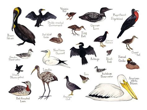 items similar to water birds field guide style watercolor