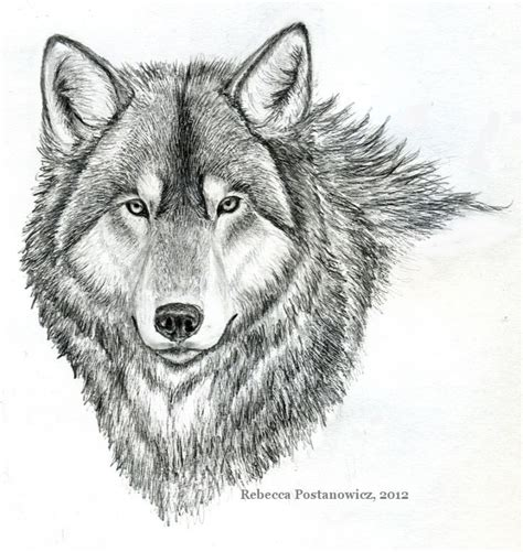 easy pencil sketches  animals wolf drawing  simple