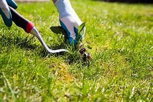 Comment Enlever Les Mauvaises Herbes : nos conseils pour mieux g rer les mauvaises herbes gazon ~ Melissatoandfro.com Idées de Décoration