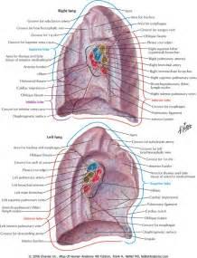 Netter Anatomy Respiratory System