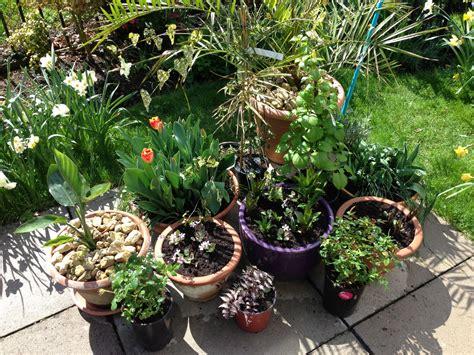 patio pots sunil s garden
