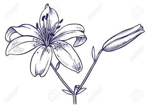 Dessin Fleur Lys  Fleurs En Image