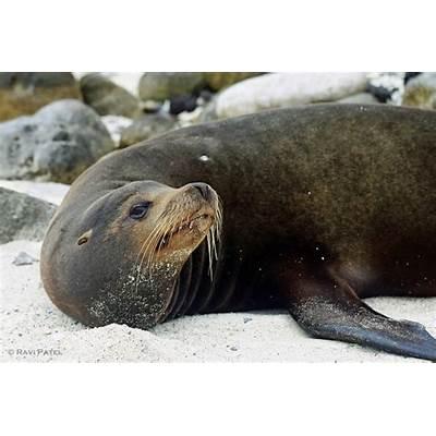 Galapagos IslandsPhotos by RaviPage 5