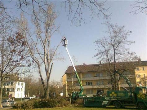 Bgl Braun Garten Und Landschaftsbau Gmbh Mainz by Navigation Referenzen Baumdienste Bgl Braun De