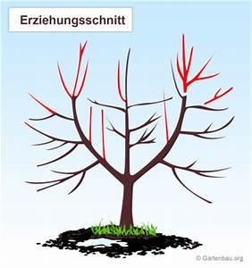 Apfelbaum Wann Schneiden : winterschnitt arten welche gibt es und was bewirken sie ~ Frokenaadalensverden.com Haus und Dekorationen