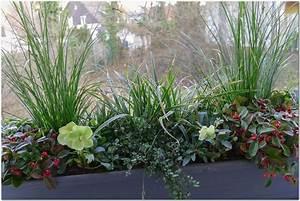 bluhende winterharte pflanzen balkon hauptdesign With französischer balkon mit pflanzen für garten winterhart