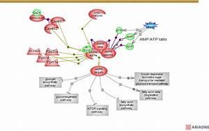 Adenosine Monophosphate