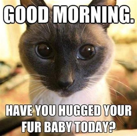 Cat Hug Meme - have you hugged your fur baby today funny memes pinterest shelters peace and fur