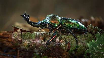 Beetle Stag Insect 4k Background Macro Wallpapers