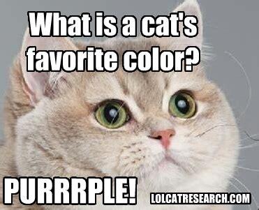 Cute Kitty Meme - lol cat research cute cat favorite color meme joke catz pinterest cat memes meme and