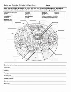 Animal And Plant Cell Worksheets Printable  U2013 Ezzy