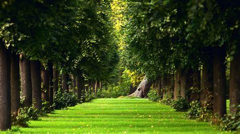 Скачать обои на рабочий стол деревья, Природа, зелень