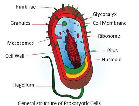 Difference Between Prokaryotic Cells Eukaryotic