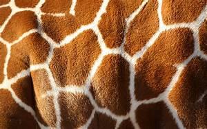 Giraffe skin [2] wallpaper - Photography wallpapers - #38259