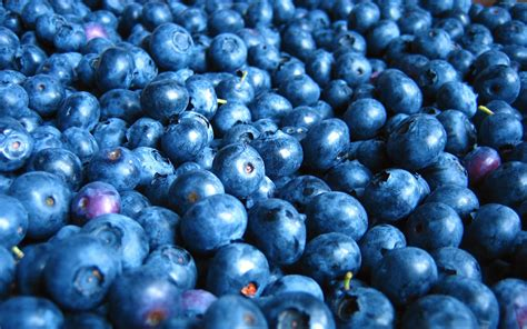 blueberry hd wallpapers backgrounds wallpaper abyss